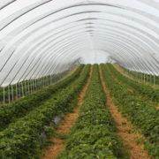 Easter Grangemuir Farm